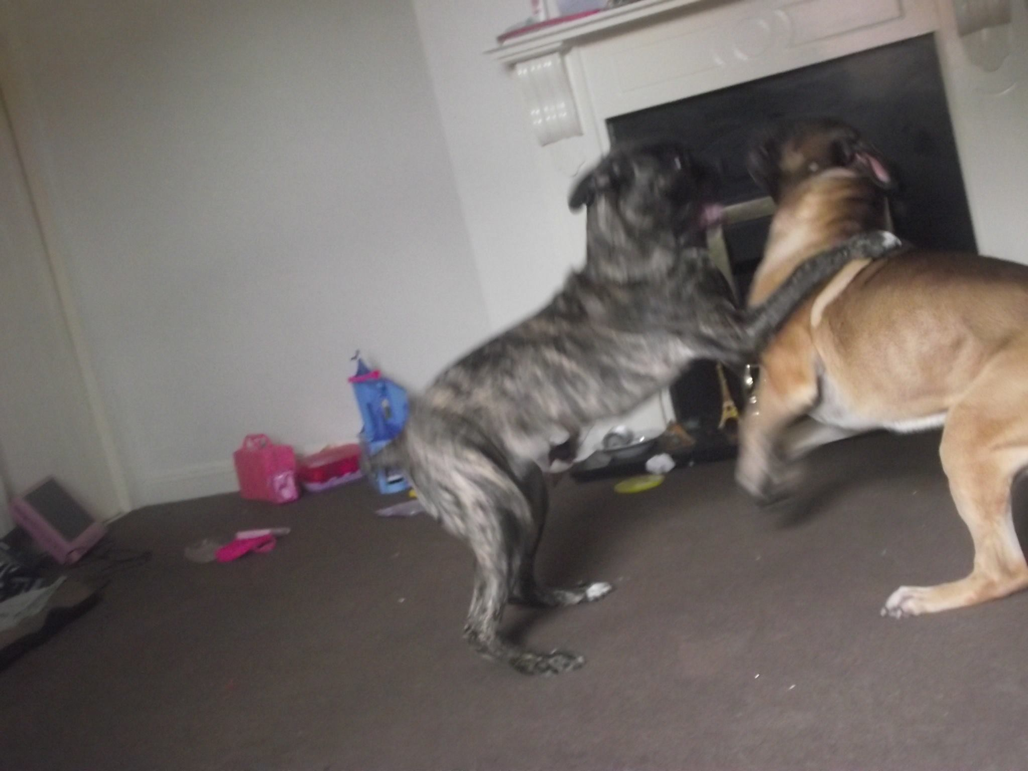 Rossie and karma 2